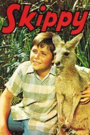 Skippy, das Buschkänguruh